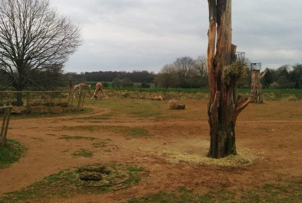 Cotswold Wildlife Park & Gardens: family day trip