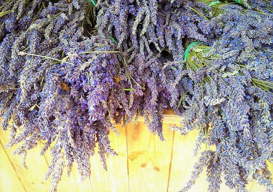 6 Ways To Enjoy Lavender
