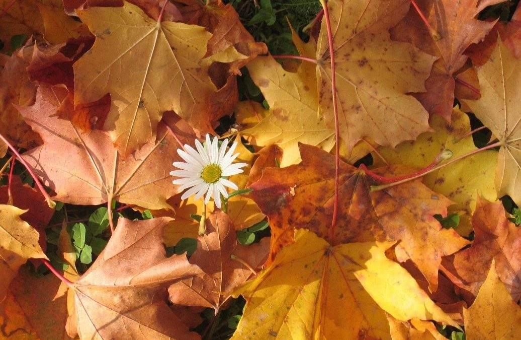 4 Tips to Tidy Your Garden for Autumn (sponsored post)