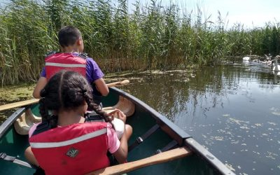 Wetland Explorers Assemble: a day at the Llanelli Wetland Centre  (sponsored by WWT Llanelli)