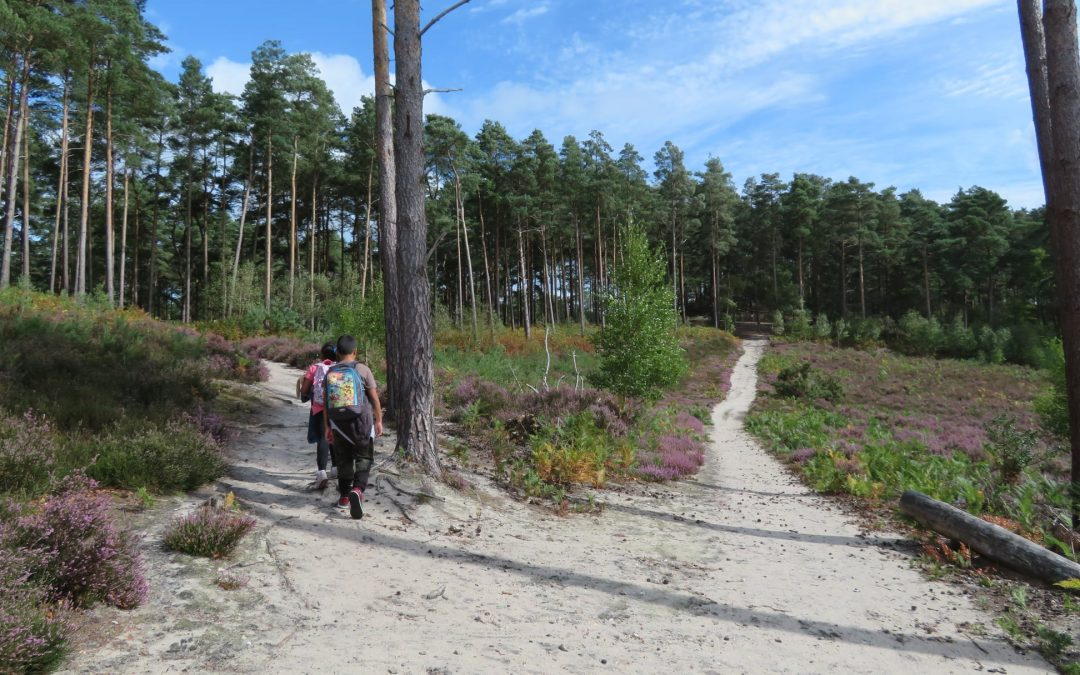 Top 5 Things To Do On Farnham Heath:  in October
