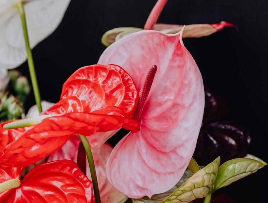6 Indoor Plants For Valentine's Day Gifting