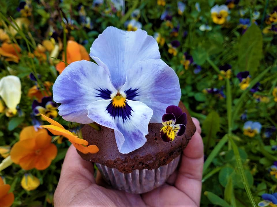 pansy and cake