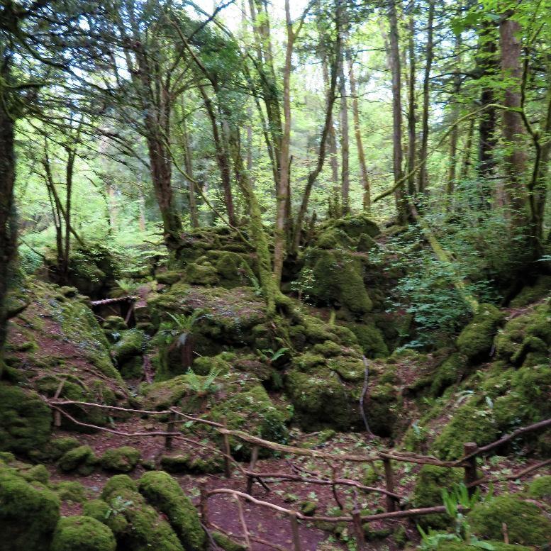 Puzzlewood Landscape